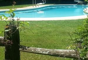 Pool beyond fence